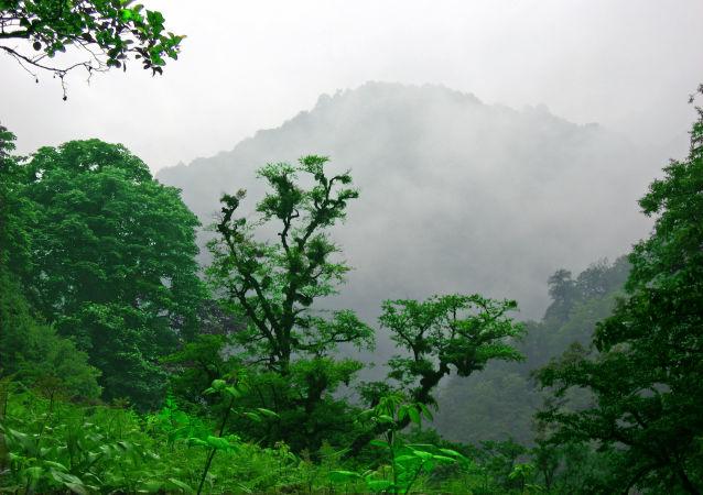 غابات هيركانيا في إيران -  تشكّل غابات هيركانيا أحراشاً فريدة من نوعها تمتد على مساحة 850 كم على طول الساحل الجنوبي لبحر قزوين. يعود تاريخ هذه الغابات النفضية إلى ما بين 25 و 50 مليون عام، وكانت تغطي حينها معظم المنطقة المعتدلة الشمالية.