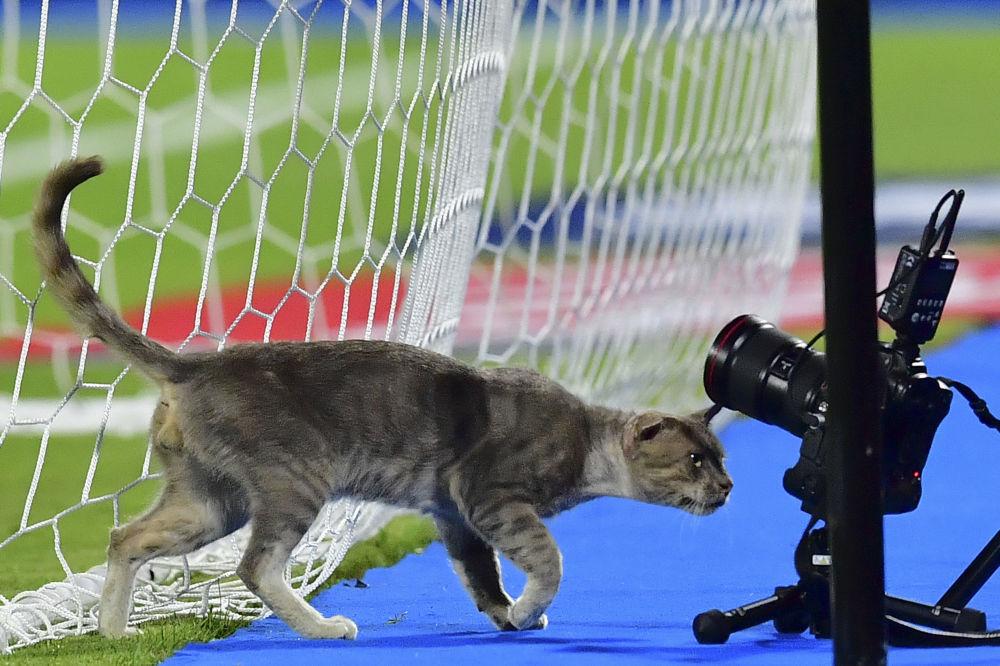 قط بين كاميرات التصوير خلال مباراة كرة القدم لكأس الأمم الأفريقية في ملعب الإسماعيلية، مصر، 8 يوليو/ تموز 2019