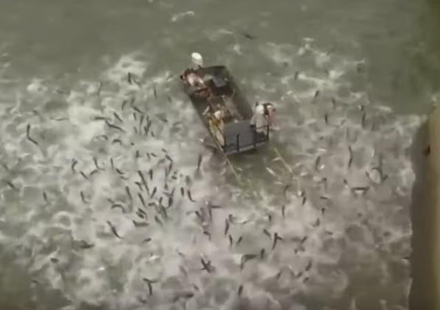 صيد السمك باستخدام الصعق الكهربائي