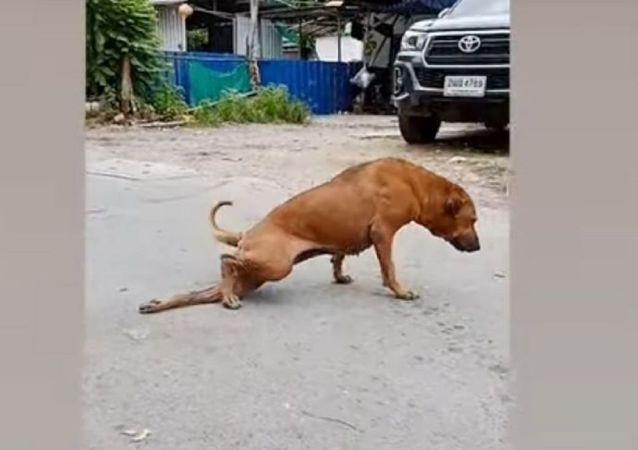 كلب يبدع بالتمثيل لجذب أنتباه المارة