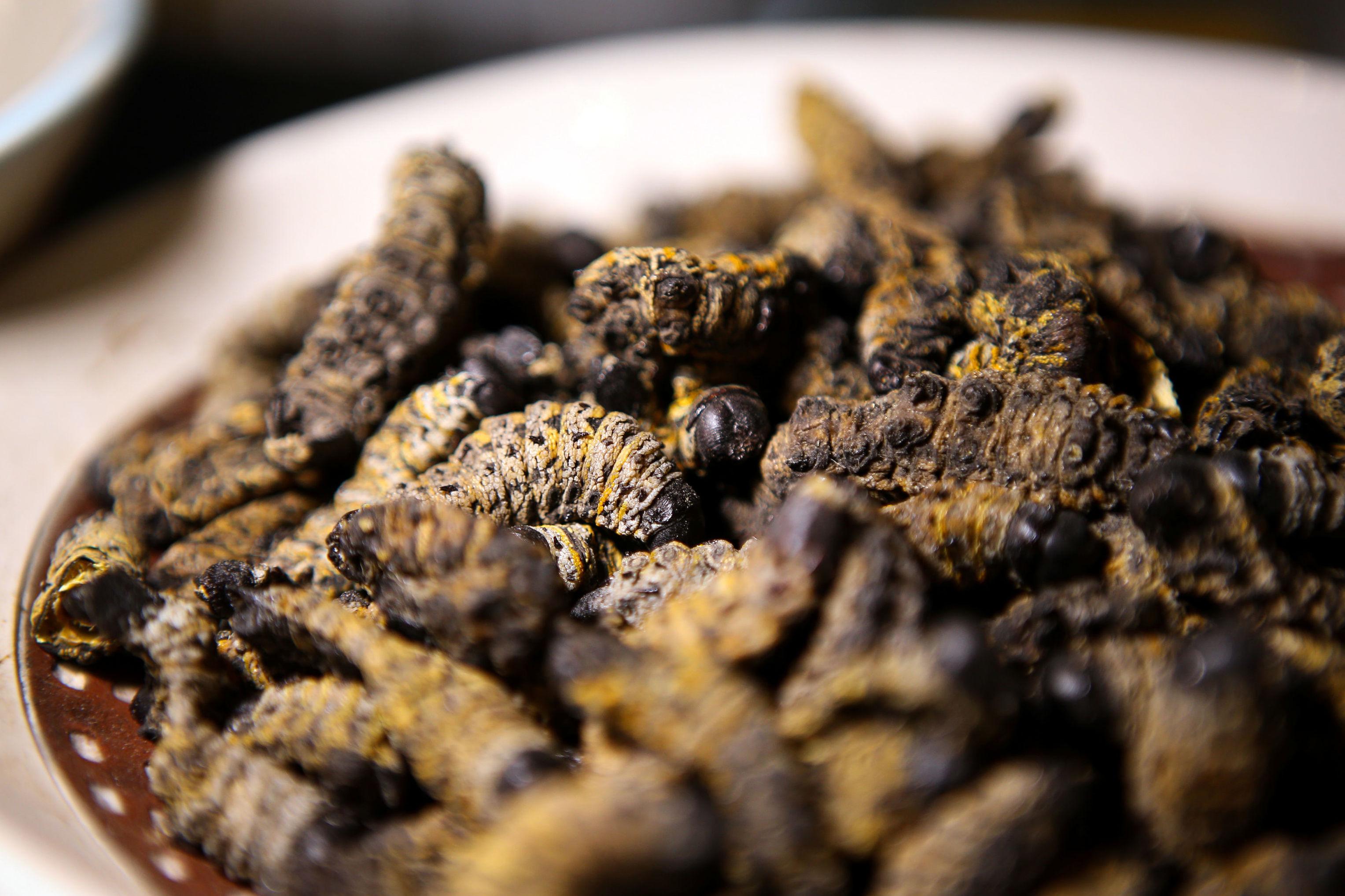 وعاء من ديدان موبان المقدمة في أول مطعم للحشرات في جنوب أفريقيا