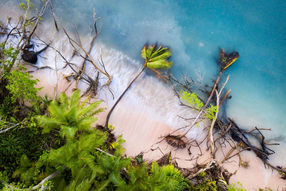 صورة بعنوان الأشجار المتساقطة بعد ارتفاع الموجة الأولى من المد، للمصور شون جالاغير، الحائز على جائزة لعام 2019، مسابقة المصور البيئي لعام 2019