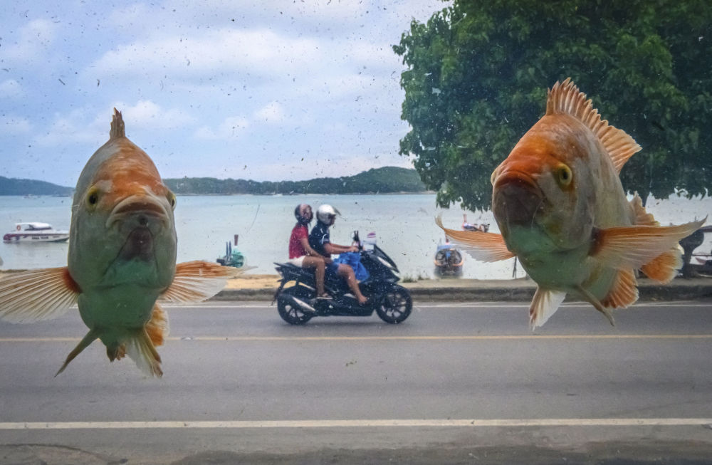 الصورة التقطت من خلال حوض للأسماك شاطئ را واي في جزيرة فوكيت، تايلاند 2 أكتوبر 2019