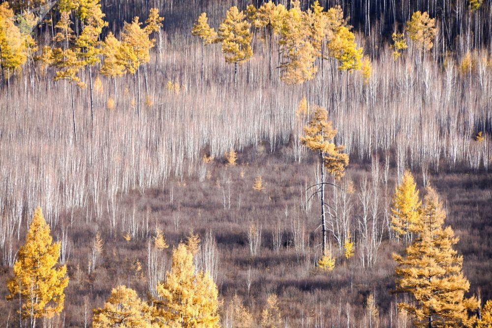 ألوان الخريف في غابات إقليم زابايكاليه الروسي