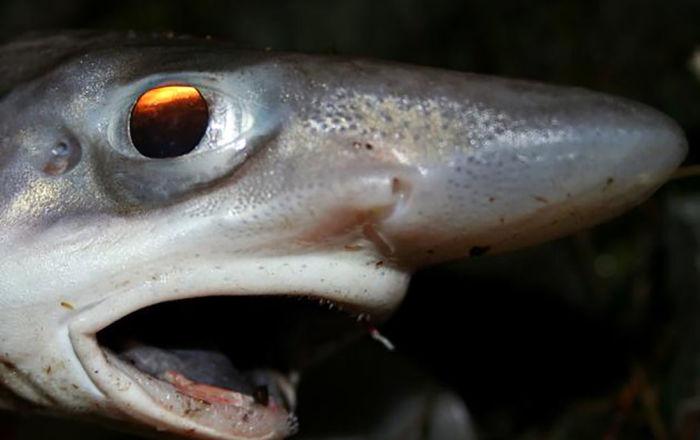 صورة زلزلت الإنترنت… حقيقة السمكة ذات الشفاه والأسنان الآدمية