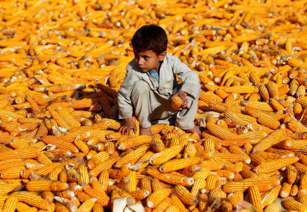 طفل أفغاني يجلس على مجموعة من الذرة في محافظة نانغارهاري، أفغانستان 15 أكتوبر 2019