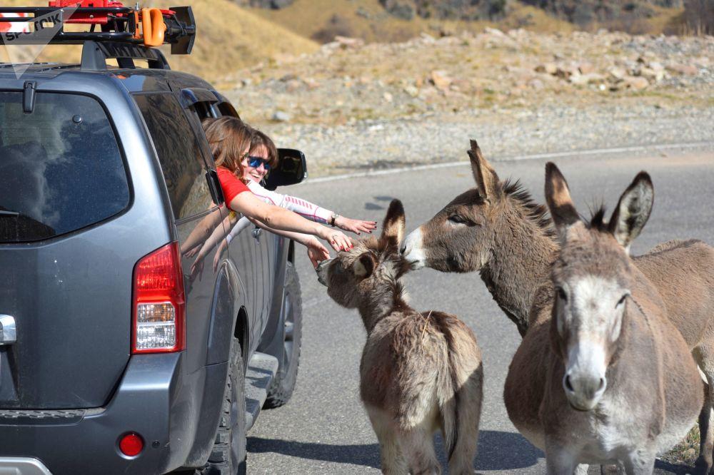 سياح يتوقفون على طريق كيسلوفودسك-جيلي-سو في قبردينو بلقاريا