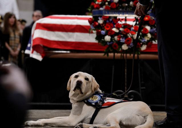 كلب الرئيس الأمريكي الراحل بوش الأب جالس خلال جنازته.