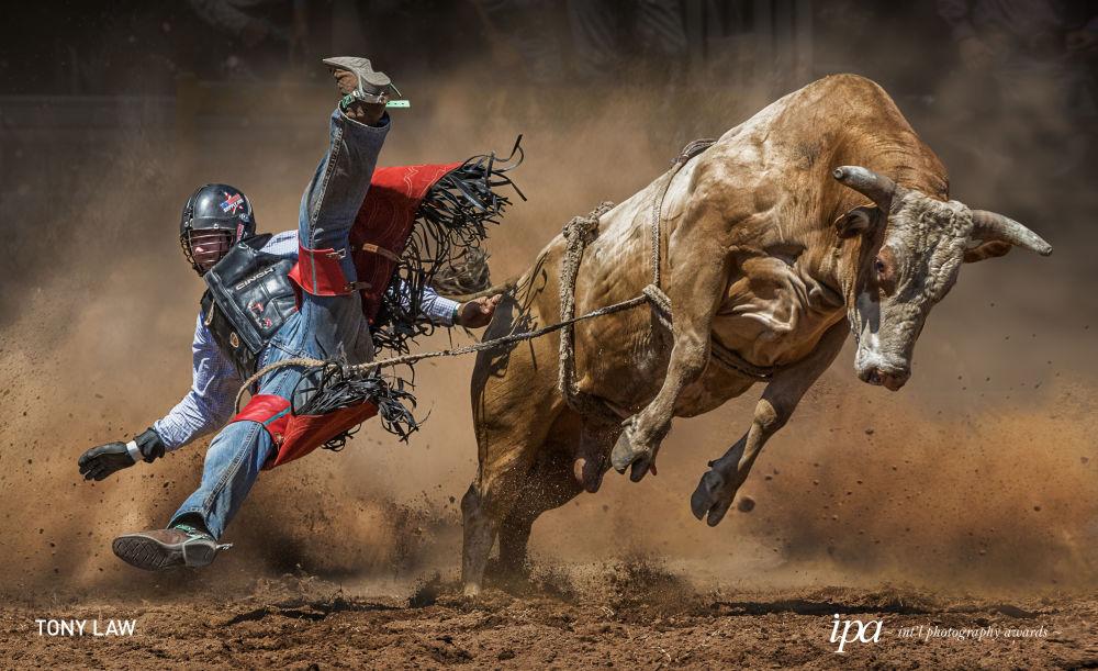 صورة بعنوان البقرة الغاضبة (Mad Cow)، للمصور توني لو، الفاز في فئة المصور الرياضي لهذا العام بين جوائز غير المحترفين ضمن المسابقة الدولية للتصوير لعام 2019