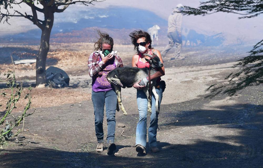 الفتيات ينقذن عنزة أثناء حريق في كاليفورنيا، الولايات المتحدة 30 أكتوبر 2019