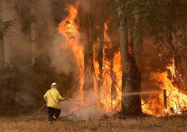 إطفاء الحرائق في أستراليا، نوفمبر 2019