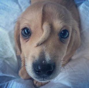 كلب عجيب ينمو ذيله على وجهه
