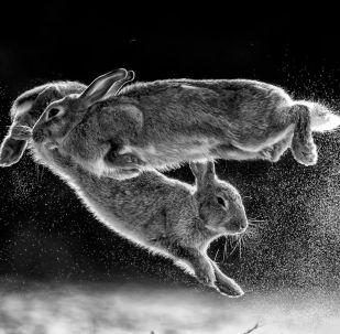 صورة بعنوان اقفز، المصور المجري سكابا داروتسزي، الحائز على جائزة مصور الطبيعة لعام 2019