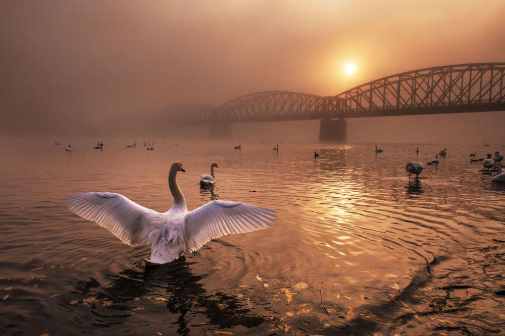 صورة بعنوان ترحيب بالشمس، المصور التشيكي بيتر تشيك، الفائز في فئة الطيور من مسابقة مصور الطبيعة لعام 2019