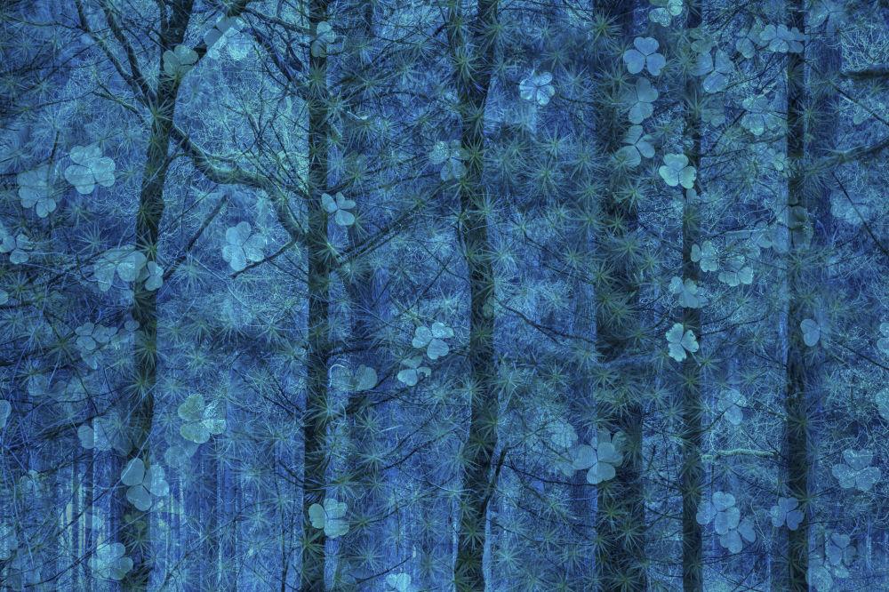 صورة بعنوان السعادة تنمو على الأشجار، المصور الألماني سيموني باومشيتر، الفائز في فئة فن الطبيعة من مسابقة مصور الطبيعة لعام 2019