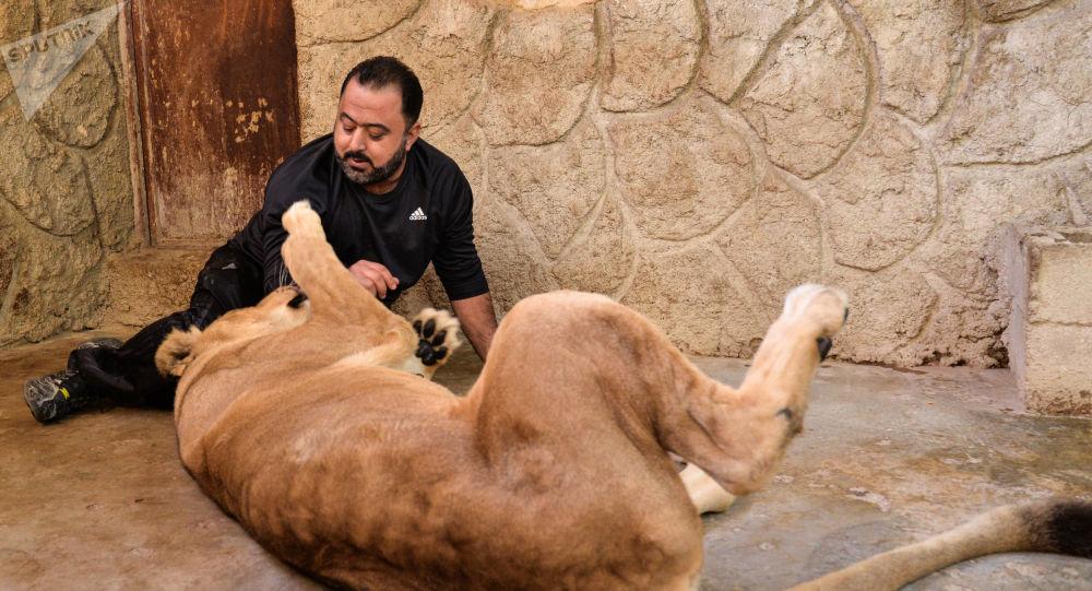 شاب سوري يحيل منزله حديقة لأندر الحيوانات المفترسة في العالم