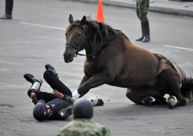 خيال يسقط عن خيله في عرض عسكري بالمكسيك