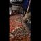 سياح عرب ينقذون عنزة من أنياب الذئاب المفترسة
