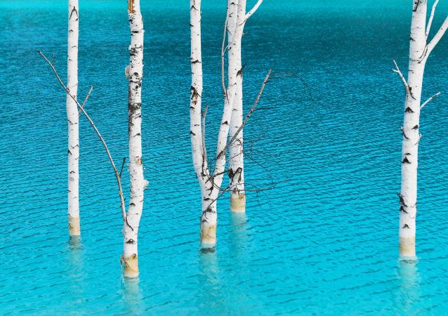 أشجار البتولا في المياه الزرقاء بالقرب من محطة الطاقة الكهربائية رقم 5 في نوفوسيبيرسك. البحيرة القرمزية، التي أطلق عليها أهالي المنطقة المحليون بـ جزر المالديف، 11 يوليو/ تموز 2019