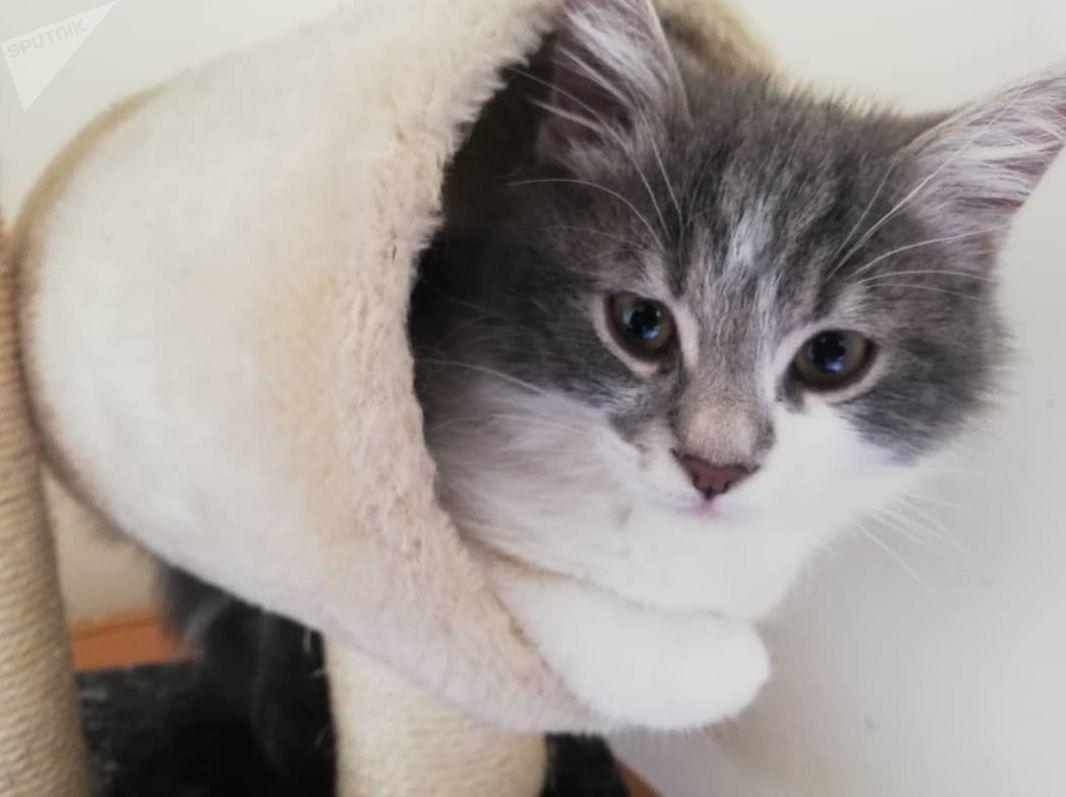 فندق للقطط في سوريا