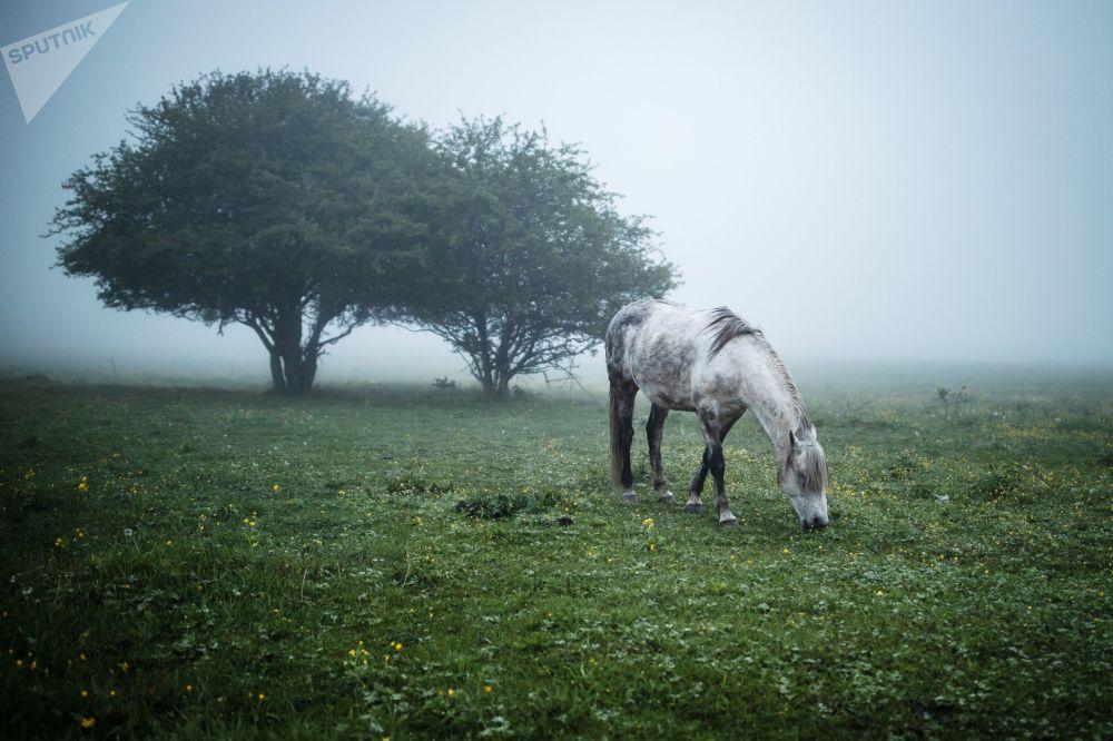 حصان في مرج بمنطقة مايكوب بجمهورية أديغيا الروسية، 10 مايو 2019