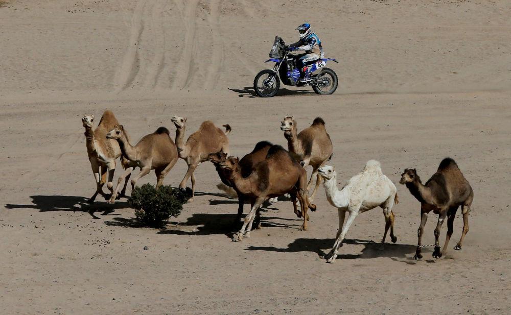 سباق رالي داكار 2020 - متسابق دراجة نارية باكو غونيس في المرحلة الثانية من السباق
