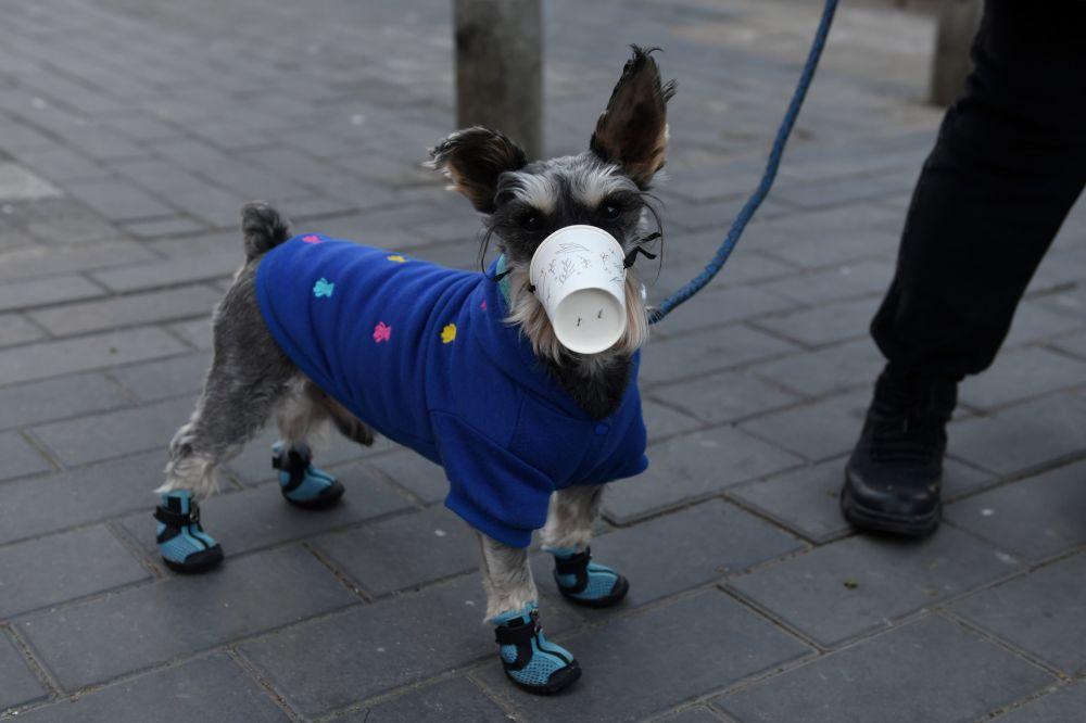 كلب يرتدي قناعا - كأسا بلاستيكيا - في أحد شوارع بكين، الصين 4 فبراير 2020