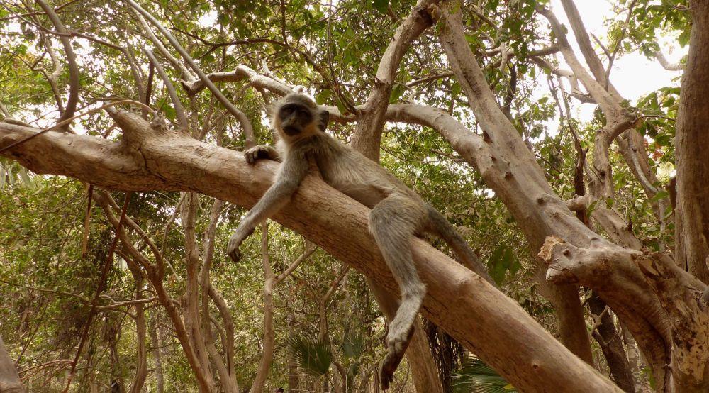 حديقة بيجيلو بارك في سيريكوندا، غامبيا