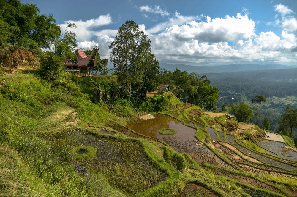 حقول الأرز في جزيرة سولاوسي، إندونيسيا