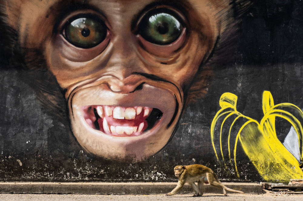 صورة بعنوان رسم غرافيتي للقرد، من سلسلة مدينة القرود من قبل المصور الإسباني المحترف خوان دي لا مالا، مُدرجة في القائمة القصيرة لجائزة سوني العالمية للتصوير 2020 في فئة عالم الطبيعة والحياة البرية
