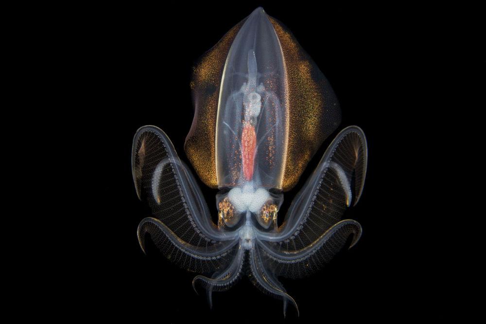 صورة بعنوان حلم الليل في المحيط، من سلسلة غالاكسي تحت الماء من قبل المصور الصيني المحترف سونغدا تشاي، مُدرجة في القائمة القصيرة لجائزة سوني العالمية للتصوير 2020 في فئة العالم الطبيعي والحياة البرية