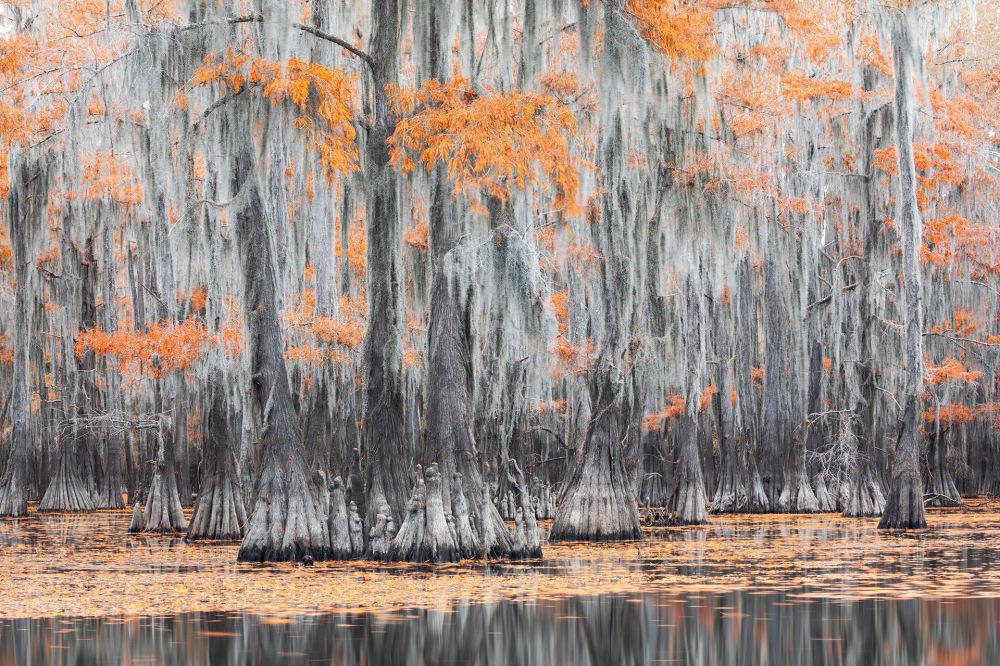 صورة بعنوان البرتقالي والرمادي، من سلسلة المستنقعات في الخريف، للمصور الإيطالي ماورو باتيستيللي، مُدرجة في القائمة القصيرة لجائزة سوني العالمية للتصوير 2020 في فئة المناظر الطبيعية