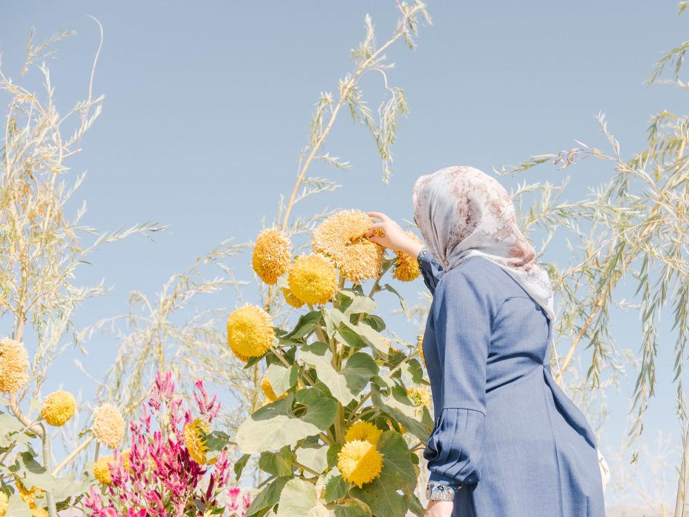 صورة بعنوان طيور الفلامنجو الباهتة، من سلسلة الفلامنجو الباهتة، للمصور الألماني ماكسيمليان مان، مُدرجة في القائمة القصيرة لجائزة سوني العالمية للتصوير 2020 في فئة البيئة