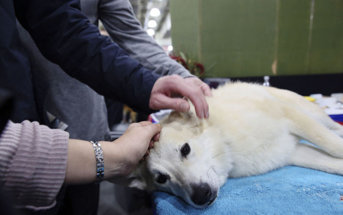 شاب مصري يبرر قيامه بسحل كلب حتى الموت