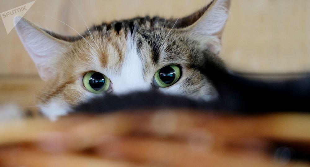 """إصابة """"قطة"""" بفيروس كورونا في روسيا"""