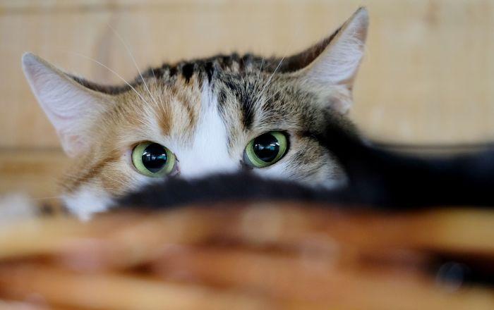 كاميرات المراقبة تصدر إنذارا بعد رصدها شبح قطة ماتت قبل أسابيع… فيديو