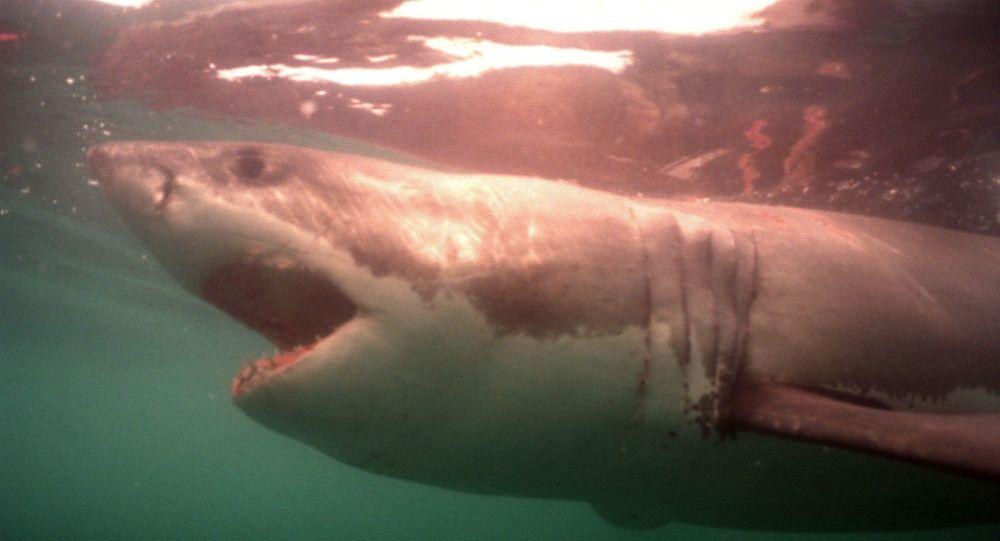 دراسة: أسماك القرش تنشئ شبكات اجتماعية معقدة تشبه المجتمعات البشرية