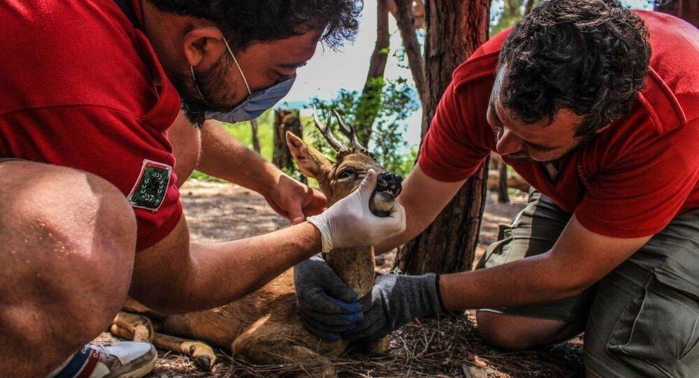 الجمعية السورية للاستكشاف والتوثيق تنقذ غزالا نادرا في محافظة اللاذقية