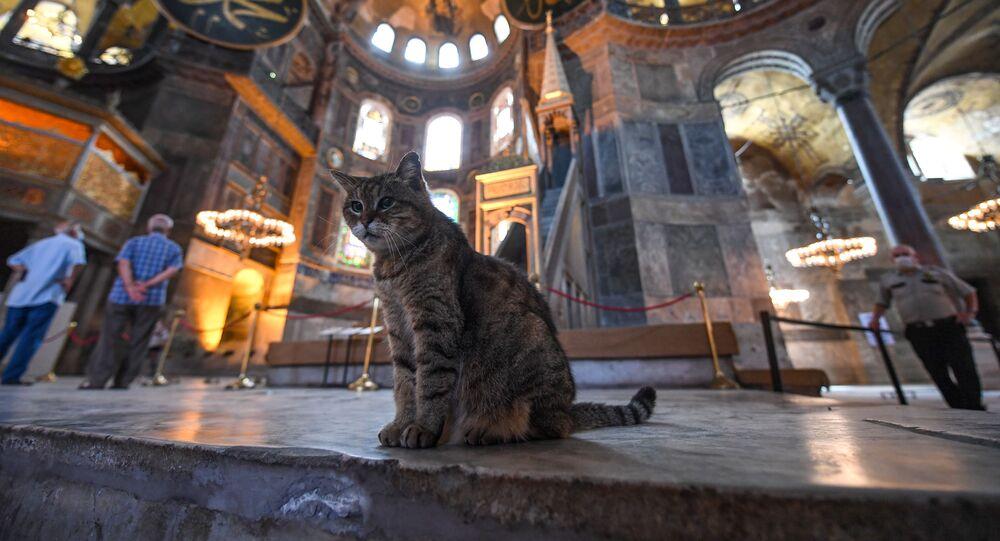 القطة غلي في متحف آيا صوفيا، اسطنبول، تركيا 10يوليو 2020