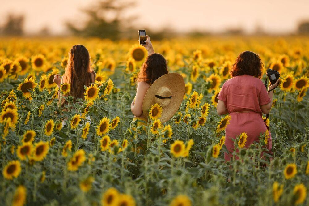 فتيات أثناء التقاط صور لزهور عباد الشمس في الحقل في منطقة سيمفيروبول، شبه جزيرة القرم الروسية 9 يوليو 2020