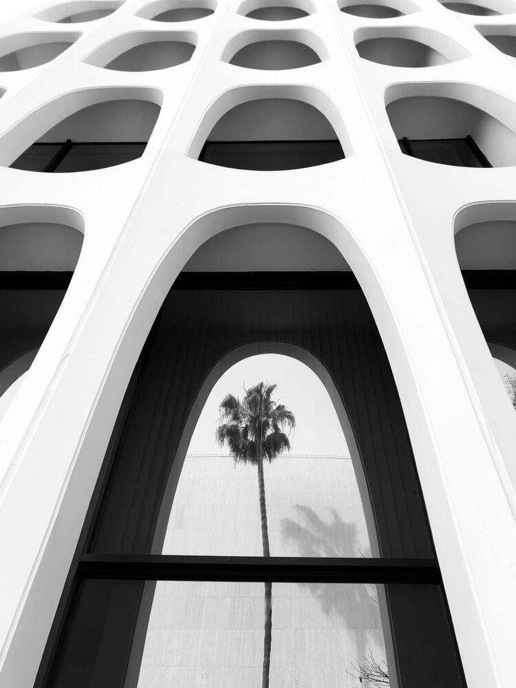 صورة بعنوان سلسلة أشجار النخيل #5، للمصور الأمريكي إميليا كاشفيان، الحائزة على المركز الثاني في فئة التصوير الهندسة المعامرية في جوائز مسابقة مصور العام في التصوير بواسطة الهاتف المحمول أيفون لعام 2020