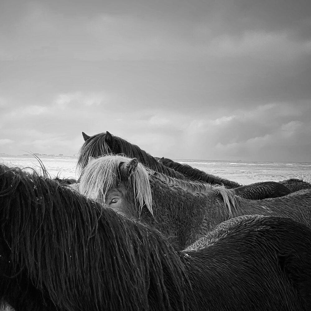 صورة بعنوان الخيول، للمصور الصيني تشياوجون جانغ، الحائز على المركز الأول في فئة التصوير الحيوانات في جوائز مسابقة مصور العام في التصوير بواسطة الهاتف المحمول أيفون لعام 2020