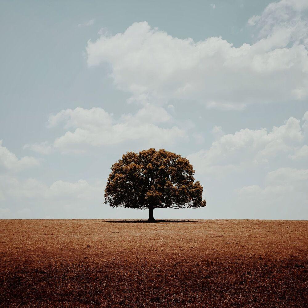 صورة بعنوان وحيد، للمصور الأسترالي غلين هومان، الحائزة على الجائزة الرئيسية في فئة التصوير الأشجار في جوائز مسابقة مصور العام في التصوير بواسطة الهاتف المحمول أيفون لعام 2020