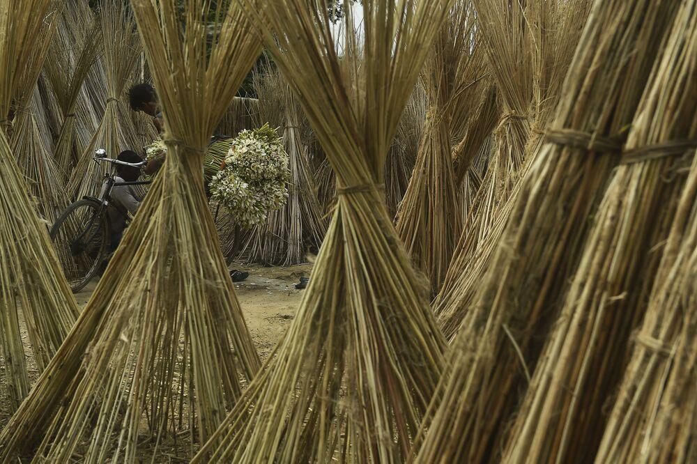 مزارع يحمّل دراجته حزمًا من زنابق الماء لبيعها في ضواحي كالكوتا، الهند 7 سبتمبر 2020