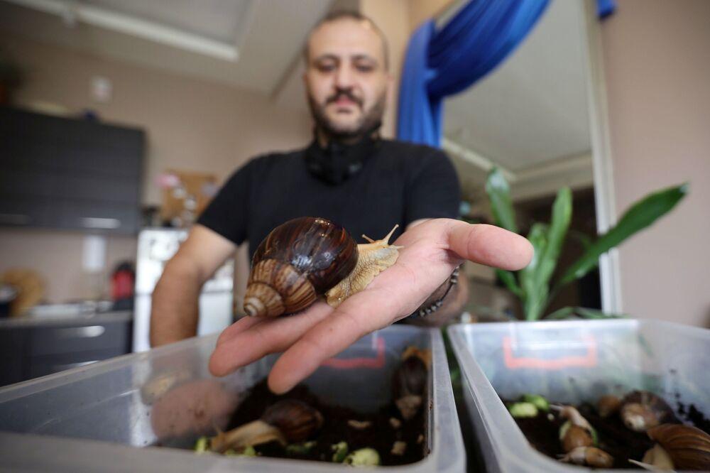 سهيل سويدان، 34 عاماً، يمسك الحلزونة البرية الأفريقية العملاقة التي سيستخدمها في جلسة لتدليك الوجه، التي تعتبر مصدراً لتعزيز مادة الكولاجين في الجلد، في مركز تجميل في عمان، الأردن، 16 سبتمبر / أيلول 2020