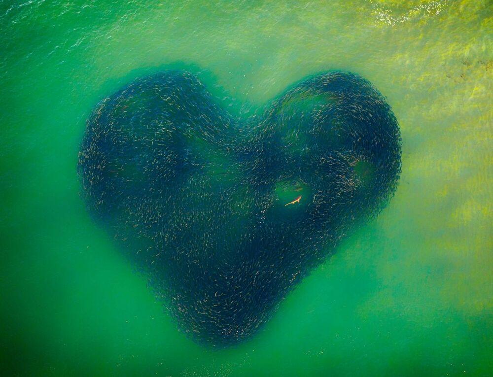صورة بعنوان قلب حب الطبيعة، للمصور جيم بيكوت، الفائزة في مسابقة  جوائز التصوير بواسطة الدرون لعام 2020