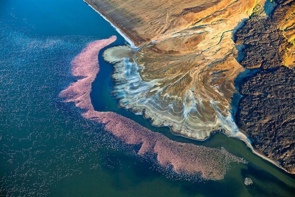 صورة بعنوان طائر الفلامينغو على بحيرة لوجيبي، للمصور مارتن هارفي، الفائزة بالمركز الثاني في فئة الطبيعة من مسابقة جوائز التصوير بواسطة الدرون لعام 2020