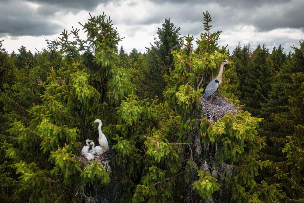 صورة بعنوان حيث يعيش المالك الحزين، للمصور دميتري فيليونوف، الفائزة في فئة الحياة البرية من مسابقة جوائز التصوير بواسطة الدرون لعام 2020