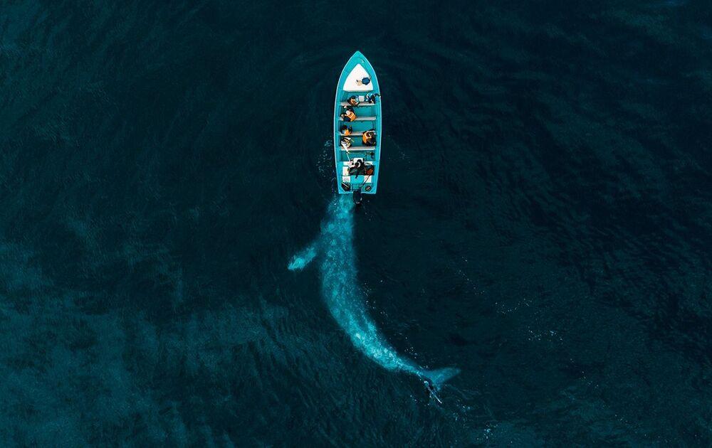 صورة بعنوان الحوت الرمادي يدفع السياح، للمصور جوزيف تشيرز، الفائزة في فئة الطبيعة من مسابقة جوائز التصوير بواسطة الدرون لعام 2020