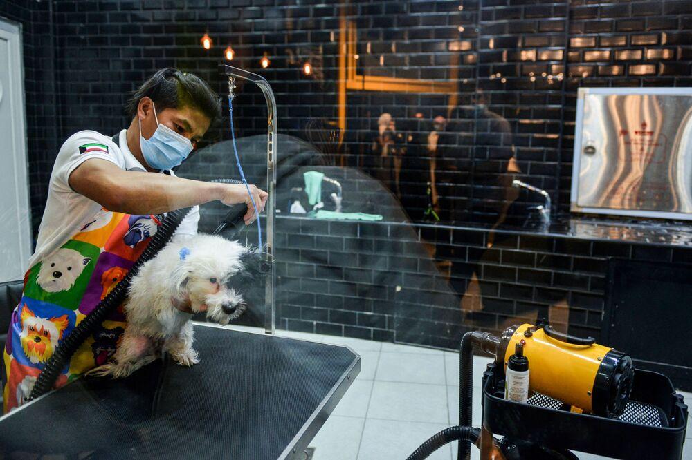 الكلاب بعد الاستحمام في مقهى Barking Lot في مدينة الخبر، المملكة العربية السعودية 25 سبتمبر 2020